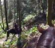Arbutus RV horseback riding Cobble Hill summit feature
